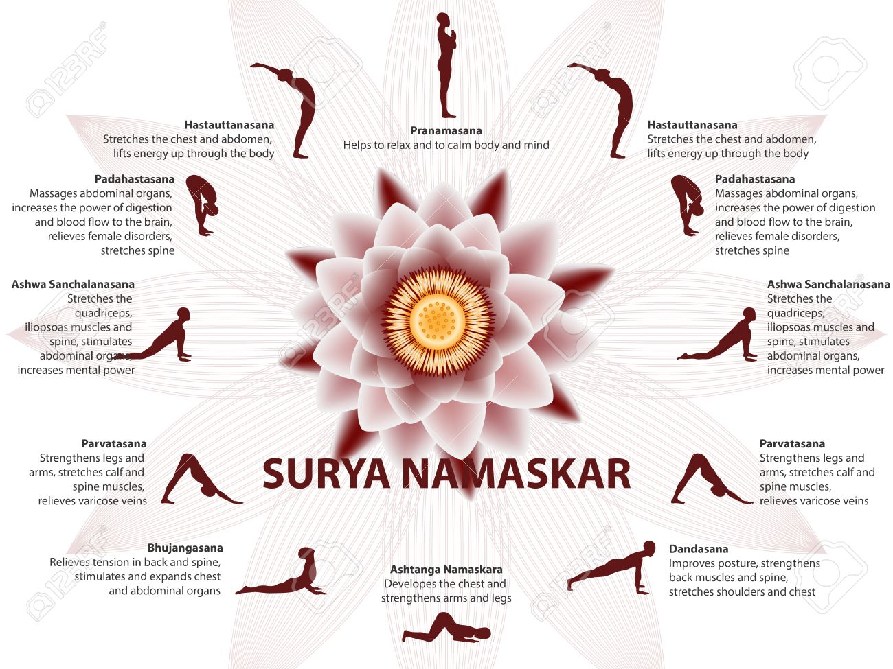 Yoga infographics, Surya Namaskar sequence